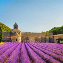 Aromatherapy Lavender field
