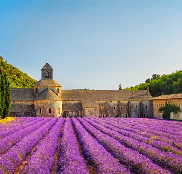 Aromatherapy Lavender field